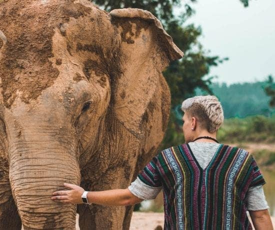 The Truth About Animal Sanctuaries in Asia