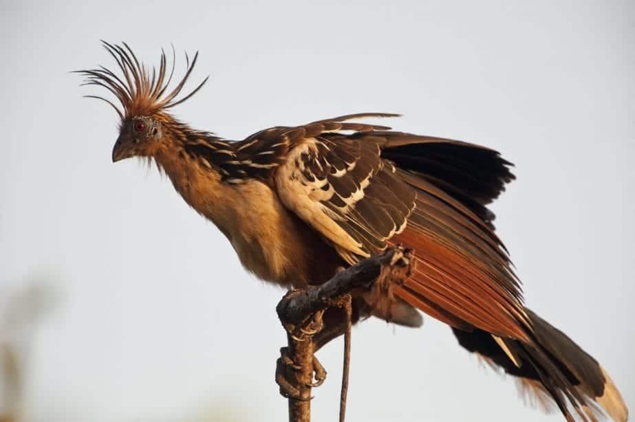 Top Wildlife Encounters in Guyana