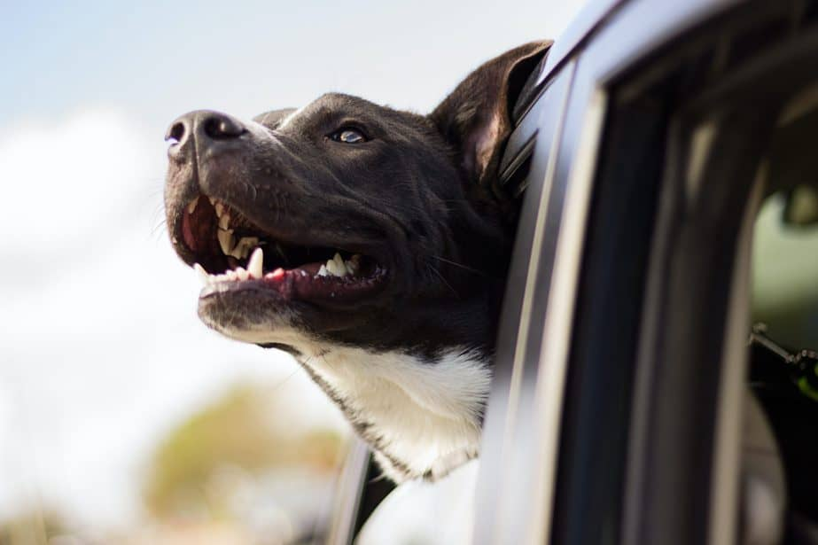 pet-friendly road trip